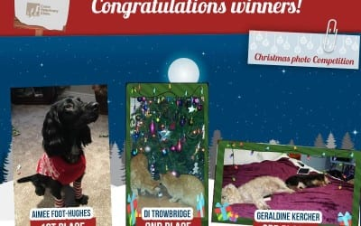 Christmas Photo Competition: Winners Announcement