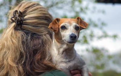Mature Pet Clinic