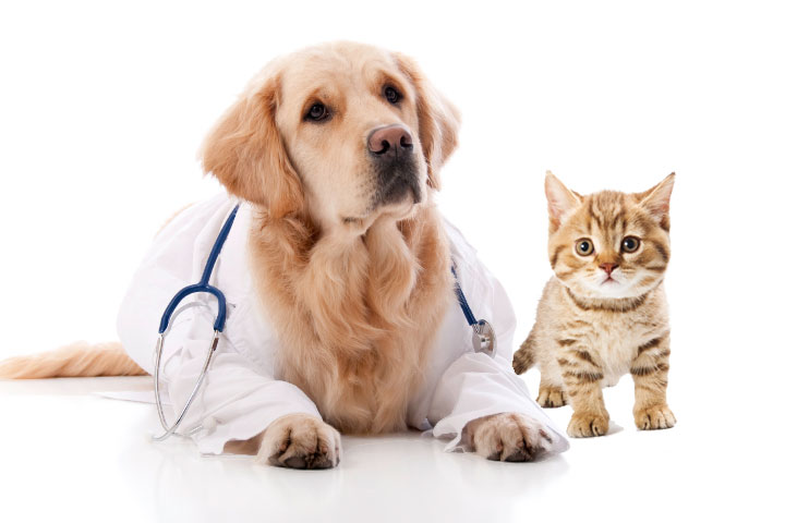 Act now to get 15% off pet vaccinations throughout Nov 2016