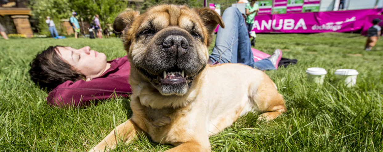 hot weather tips on how to help your pet when wiltshire