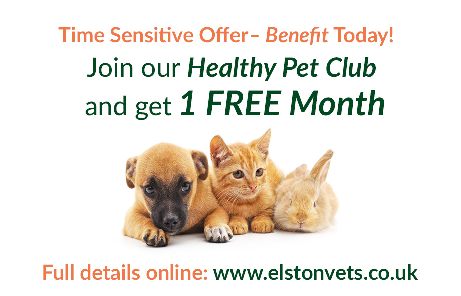 Join our local Healthy Pet Club and save money on pet healthcare today