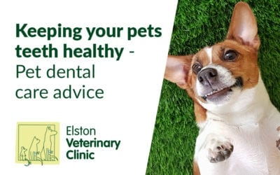 Keeping your pets teeth healthy | Pet dental care advice