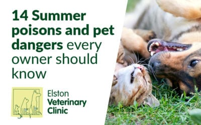 14 Summer poisons and pet dangers every owner should know
