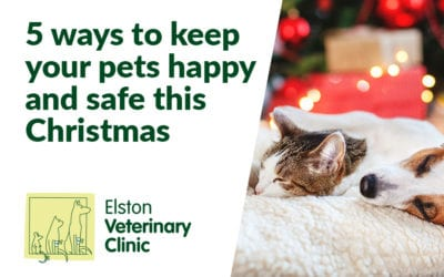5 ways to keep your pets happy and safe this Christmas