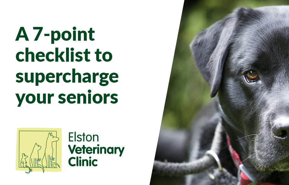 A 7-point checklist to supercharge your seniors
