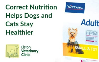 Correct Nutrition Helps Dogs and Cats Stay Healthier