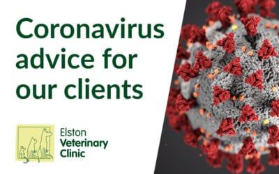 Coronavirus: Latest COVID-19 Advice for Pet Owners