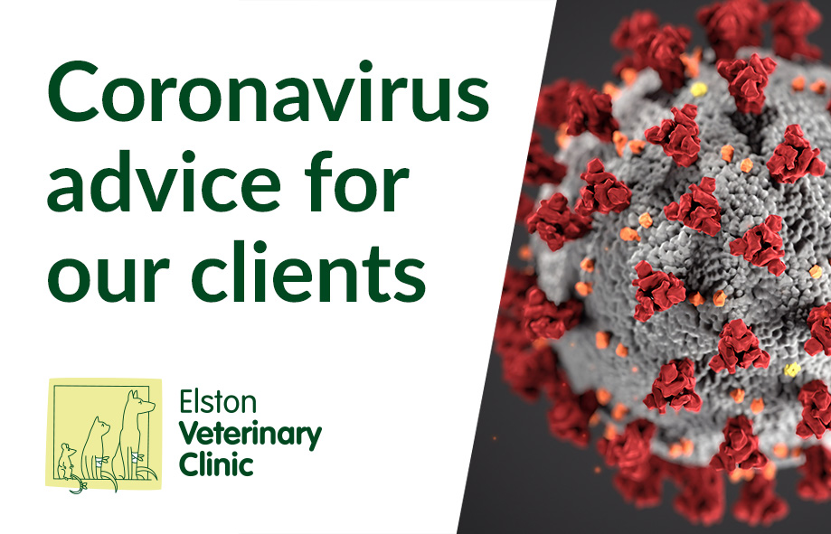 Coronavirus Advice for our Clients | 16 March 2020 | Elston Vets